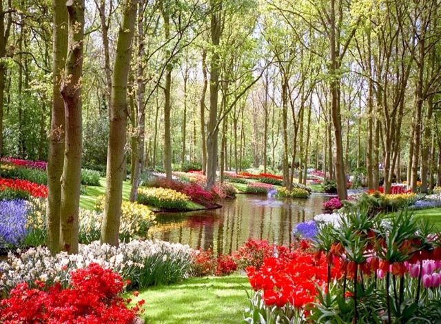 Imagenes Jardines bonitos con flores para usar como fondo