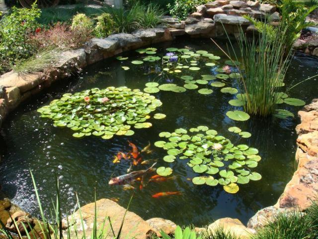 Imagenes con ideas para tu estanque silvestre