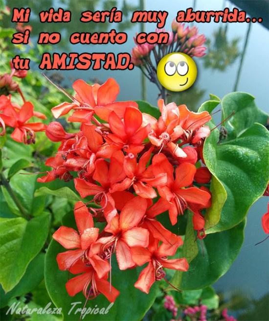Imagenes de flores con mensajes de amistad