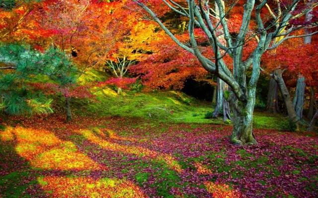 Imagenes para wallpaper de jardines floridos