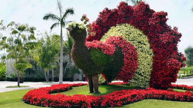 Jardines de méxico pavo de flores