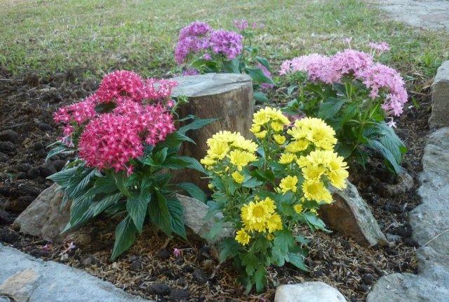 Troncos con flores en el jardin