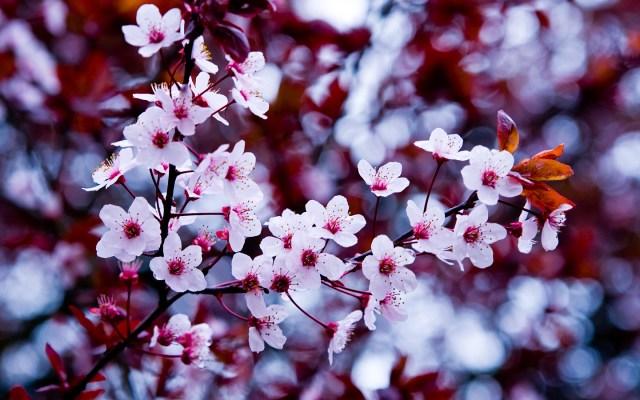 primavera flores para fondo de celular