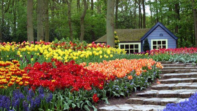 Imagenes con Ideas de Flores De Primavera para El Jardin