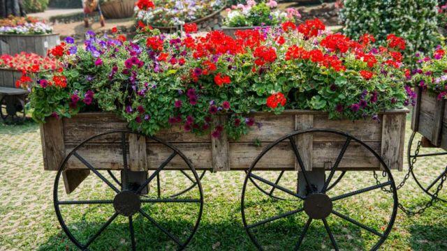 Imagenes de Carretas para decorar el jardin con flores