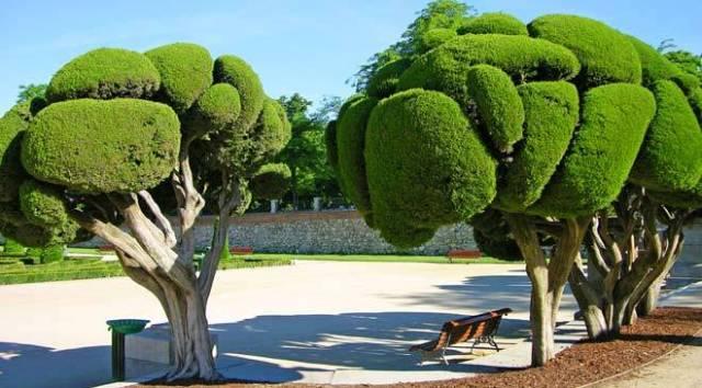 Jardines en Madrid parque del retiro