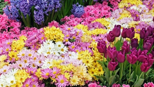 Rosas tulipanes lirios y margaritas jardin de primavera