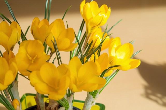 Fondo de celular de flores amarillas