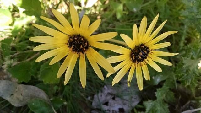 Imagenes de flores amarillas silvestres
