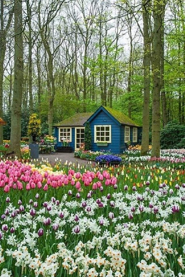 Imagenes de los Jardines de flores en Keukenhof Amsterdam - Holanda