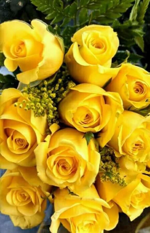 Imagenes de rosas amarillas
