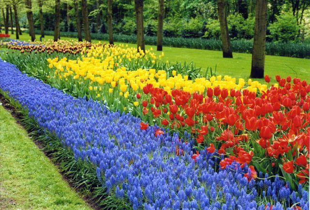 Imagenes del Jardin de Tulipanes Keukenhof