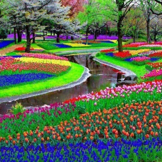Imagenes del jardin mas hermoso de flores en Holanda