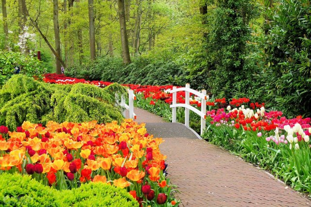 Linda imagen del jardin de flores en holanda Keukenhof
