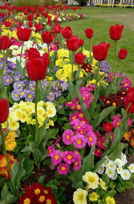 Hermosos jardines de flores para el celular