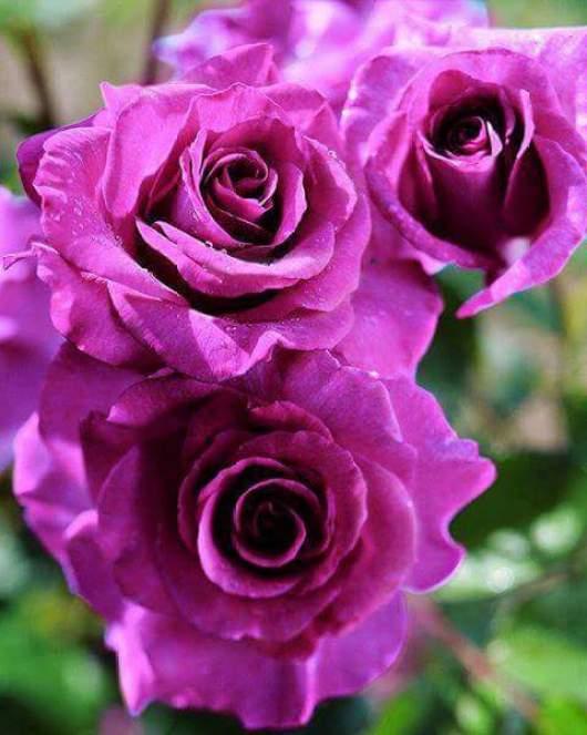 Imagenes con flores hermosas para el celular