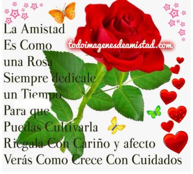 Linda imagen de rosa roja con poemas para celular