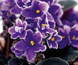 Imagenes De Plantas Para El Hogar Con Flores