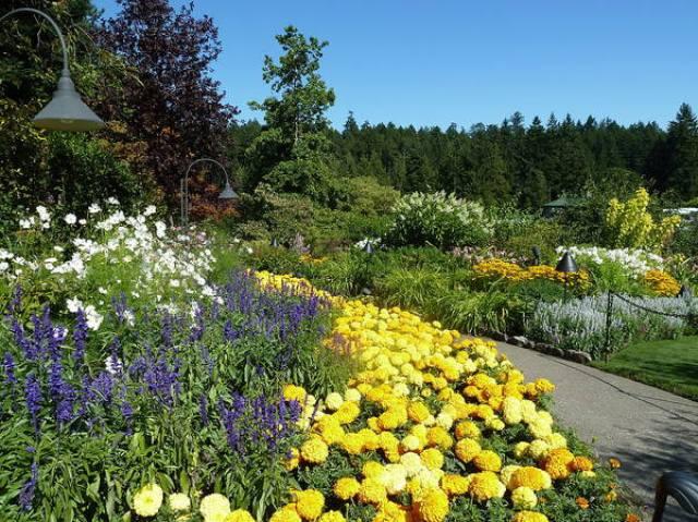 Descargar imagenes del jardin Butchart