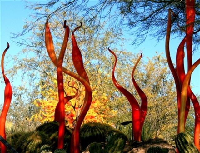 Fotografías del Jardin Botanico del desierto Arizona