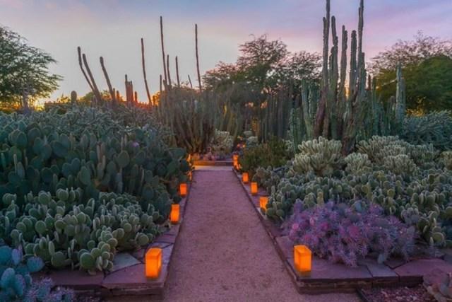 Fotos Jardín Botanico en Phoenix