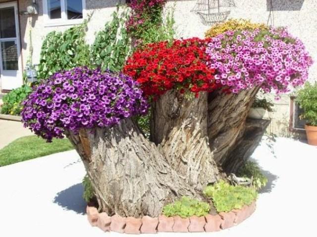Fotos de troncos usados como materos de flores para el jardin