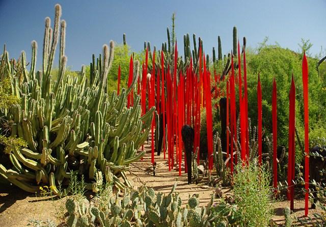 Fotos en el jardin botanico de Phoenix - Arizona