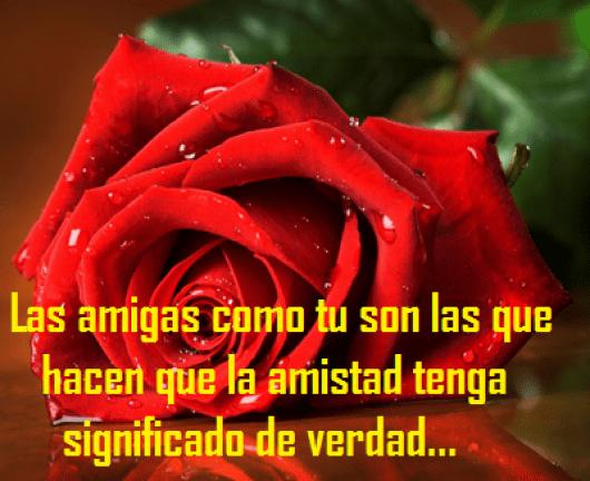 Imagen de una rosa con frases de amistad