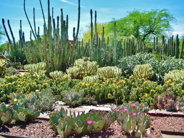 Imagen del Jardin botanico del desierto en Phoenix Arizona