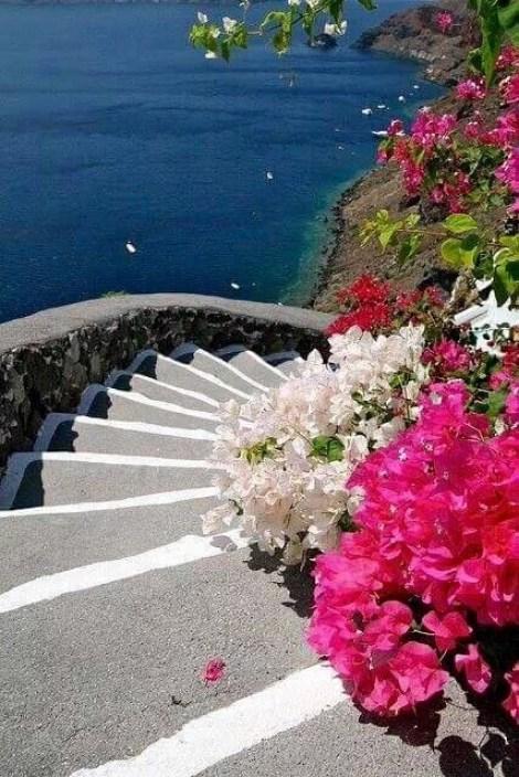 Imagenes de jardines con flores para fondo de whatsapp