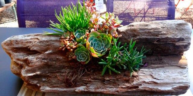 Imagenes de troncos usados para decorar con plantas y flores el jardin