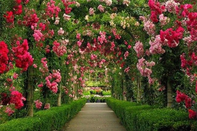 Imagenes del jardin de flores en Butchart en Canadá