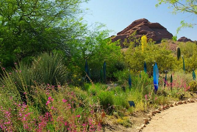 Imagenes paisajes del jardin botanico del desierto en Arizona