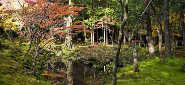 imagenes-jardin-de-musgo-saiho-ji-en-japon