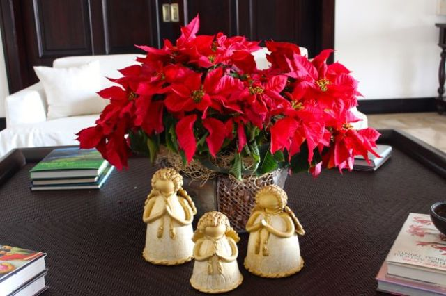 decoraciones-con-poinsettias