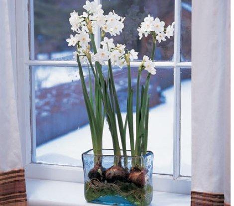 imagenes-de-flores-para-la-epoca-de-navidad-narcisos