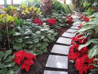 imagenes-de-jardines-con-flores-ponsetia