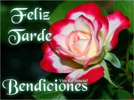 Imagenes Feliz Tarde con rosas
