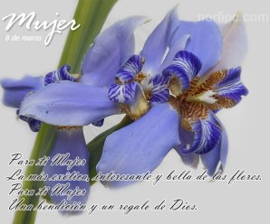 Imagenes Con Flores Con Mensaje Para El Día De La Mujer
