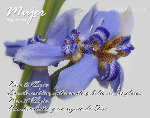 Mensaje para el día de la mujer en imagenes de flores