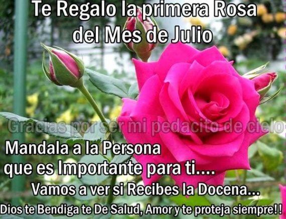 Te regalo la primera rosa del mes de julio