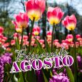 Imagenes De Jardines Y Flores Bienvenido Mes De Agosto