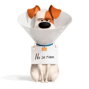 max-el-secreto-de-las-mascotas