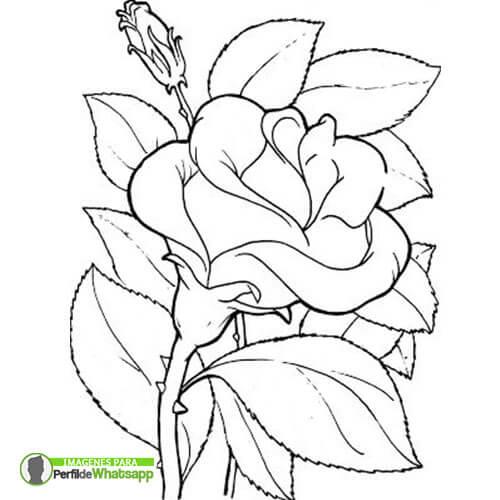 Rosas Para Dibujar Y Colorear Dibujo De Vidriera Rosa Para Colorear