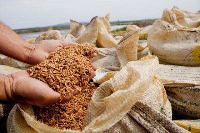 arroz importação