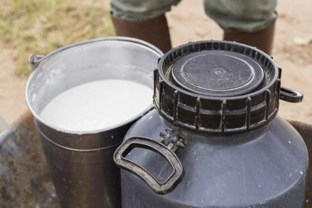 galão de leite