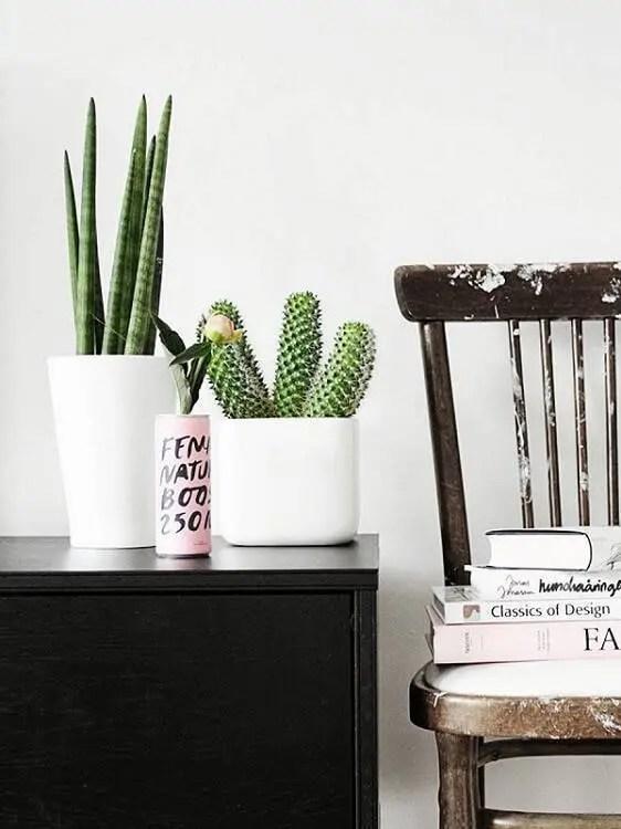 cacto em móvel com cadeira decorativa