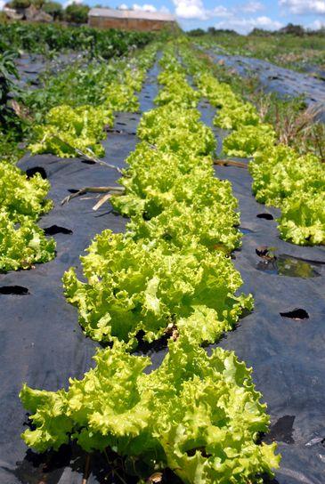 agricultura orgânica