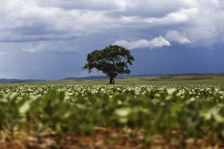 Alto Paraíso (GO) - Plantação de soja em área do município de Alto Paraíso mostra o avanço da fronteira agrícola na região da Chapada dos Veadeiros (Marcelo Camargo/Agência Brasil)