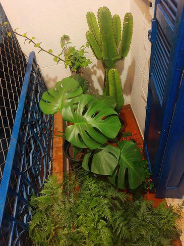 Cultivo de plantas em casa é alternativa de atividade durante o isolamento social